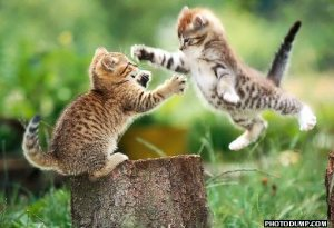 flying-cat-fight-1.jpg