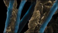 electric_bacteria