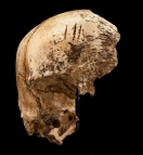 Victim of Cannibalism in 17th Century Jamestown
